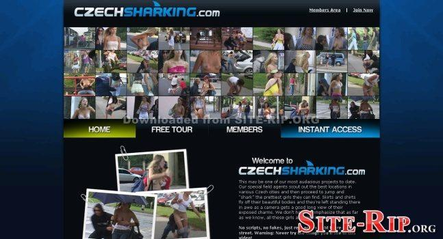 33452606_czechsharking